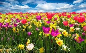 PRIMAVERA-campo-di-fiori