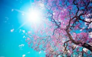 primavera_aa